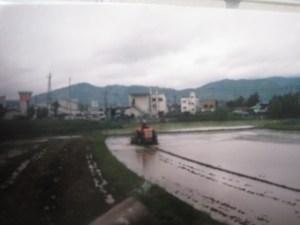 rice field in Kameoka, Japan