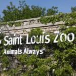Saint Louis Zoon Animals Always