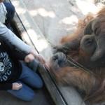 orangutan hands next to Georgia's