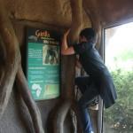gorilla DNA & monkey boy :)
