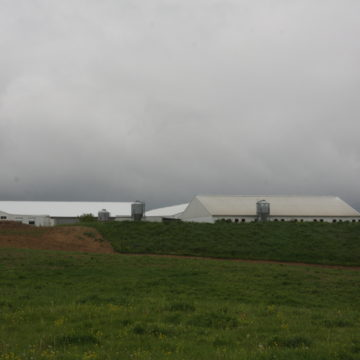 pig barns from down hill