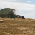 combine harvesting wheat on the farm