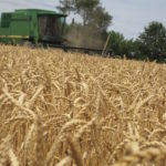 harvest across a wheat field