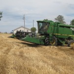 combine ready to harvest wheat