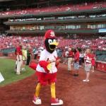 Fredbird St Louis Cardinals