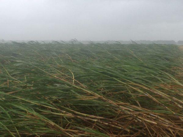 The whole plantation looks the same -- Brandon Gravois, So. Louisiana 9 am 8-29