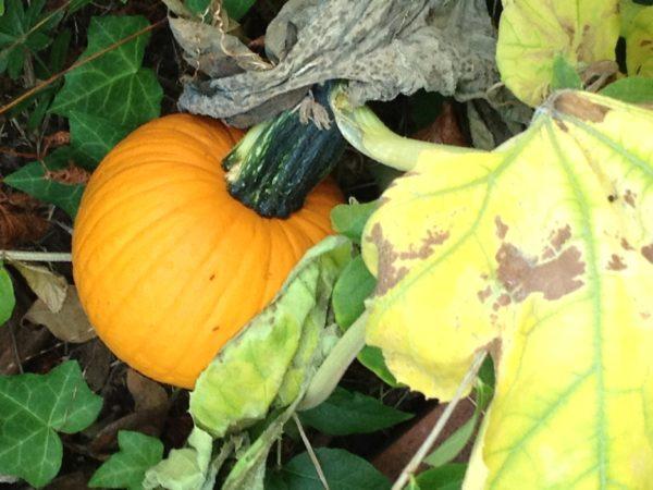 a small bright orange pumpkin