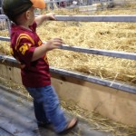 little kid checking out the cow & calf pen