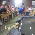 the duck exhibit at the Animal Learning Center of the Iowa State Fair