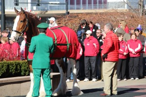 a lone clydesdale at Stan Musial's funeral