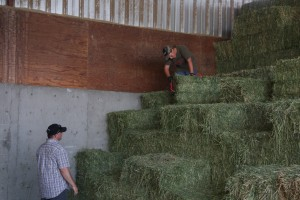 moving quare bales at RayLinDairy