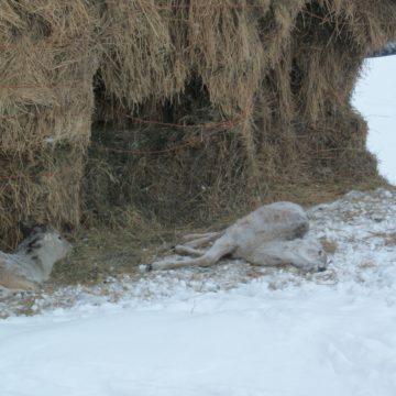 Deer disease issue