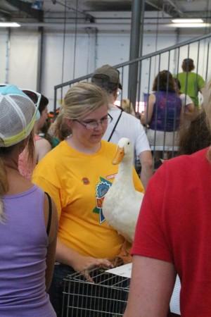 Nebraska farm kid with her duck
