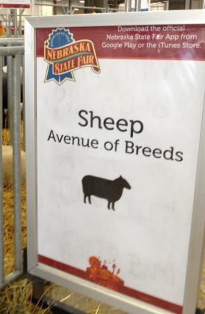 sheep avenue of breeds