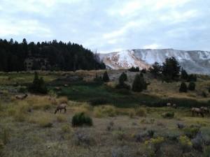 Mammoth Falls Yellowstone