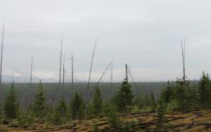 impact of Yellowstone fire