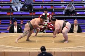 quick start to a sumo wrestler