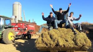 Peterson Farm Bros Chore