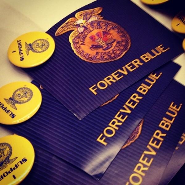 Forever Blue FFA