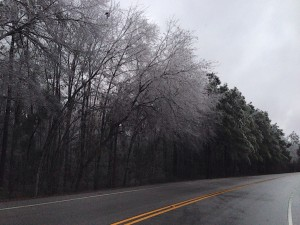 icy coating on trees