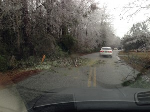dodging limbs in the road