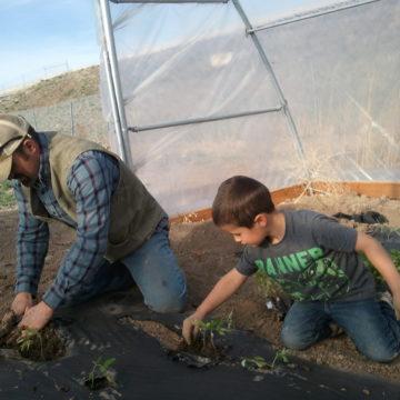 Peterson Farms Finn & Luke