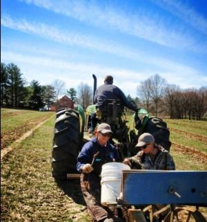 Planting Vineyard