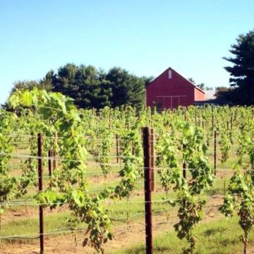 Vineyard in Fall -- The Farmed Life