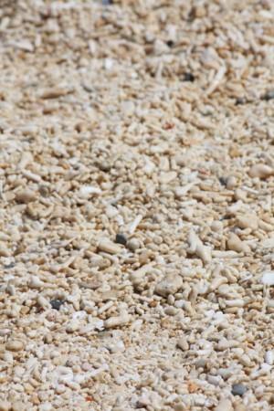 shells on puka beach
