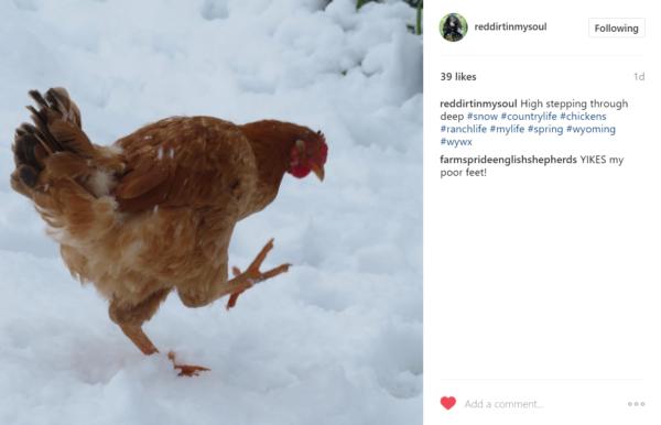 Carol Burton reddirtinmysoul instagram