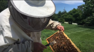 jerry checking the hive