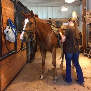 horse husbandry