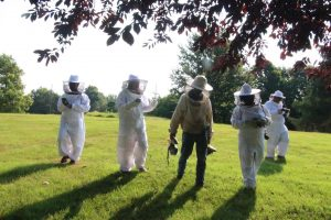 bee hive visit