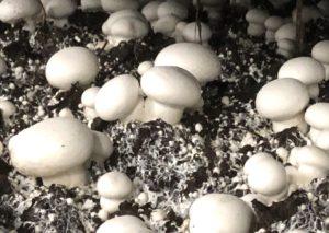 cylindrical stems