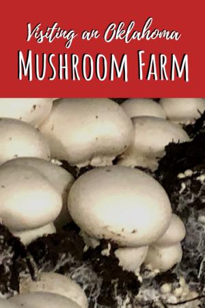visting a mushroom farm